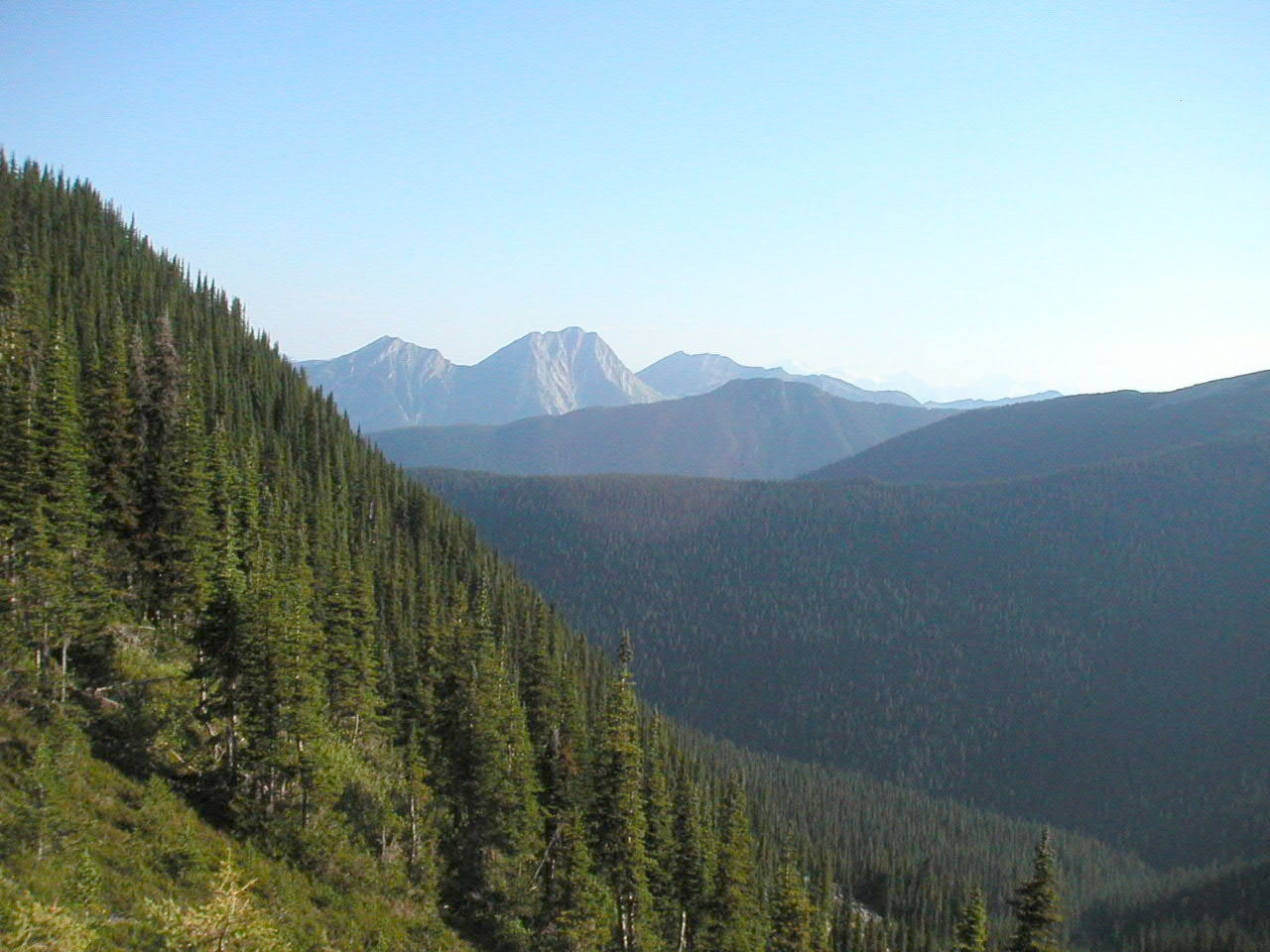 Mountain Caribou Habitat